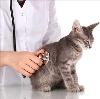 Ветеринарные клиники в Глушково